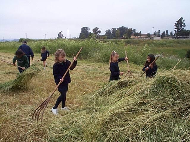 bailing hay.jpg